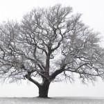 Totalitarian Trees