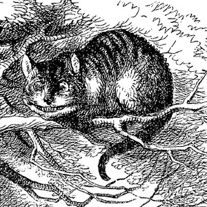 Cat murder in early modern Ypres « Beachcombing's Bizarre History Blog