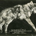 The Allendale Wolf