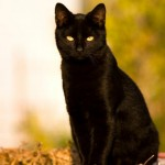 Black Cats: Unlucky for Some