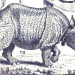A Rhinoceros in Eighteenth-Century London