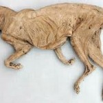 Dried Cats