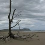 Beachcombed 19