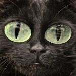 Cat Clocks - No Really!