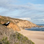 Beachcombed 22