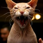 How Cats Create Neurotic Societies
