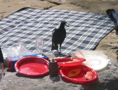 magpie on beach