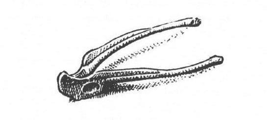 frog wishbone