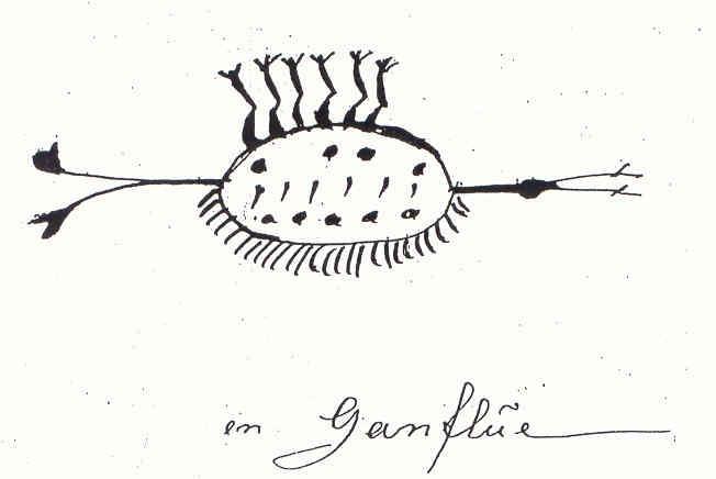 gannflue