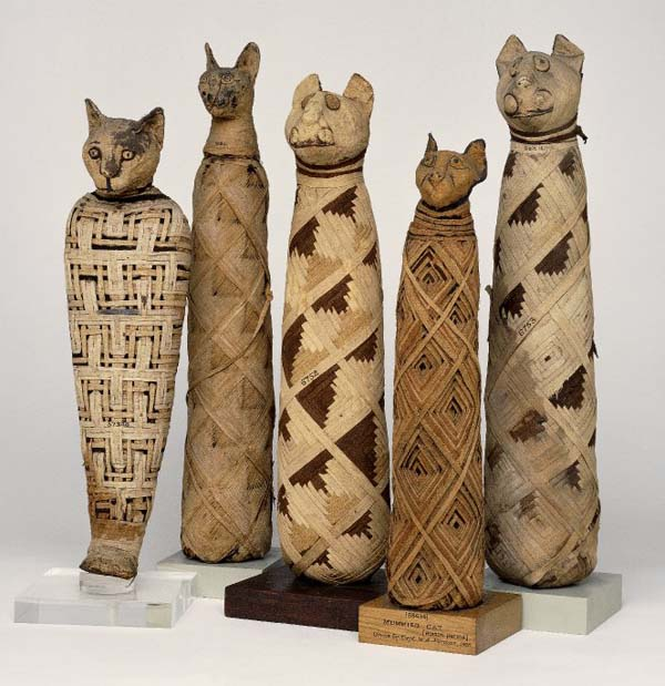 mummified egyptian cats