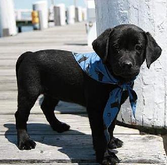 Black Dog Pictures black dog