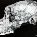 African Ape in Iron Age Ireland?