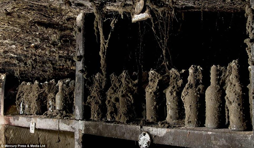 cobweb bottles