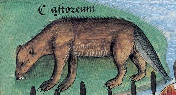 livre des simples medecines c. 1489