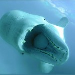 Swallowed by a Whale?