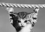 Hating Medieval Cats #1: The Rope Cat