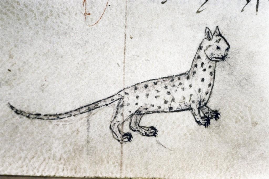 cat fifteenth century england