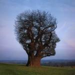 The Children Tree
