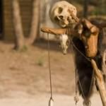 Ritual Murders in Nyasaland