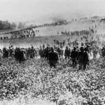 Daily History Picture: 1914 Advance Through Flowers