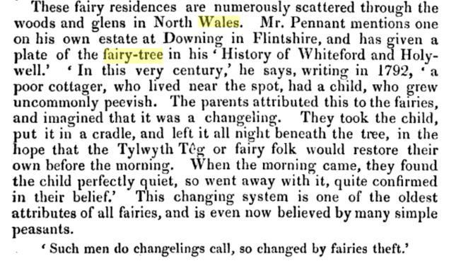 fairy tree Flintshire Histoyr of Whiteford and Holywell