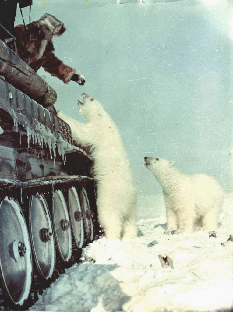 Daily History Picture: Tank Crew and Polar Bears