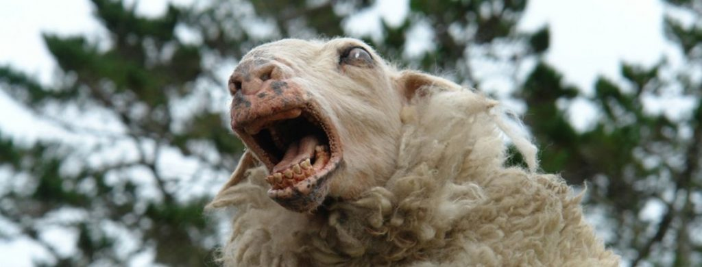 sheep killers