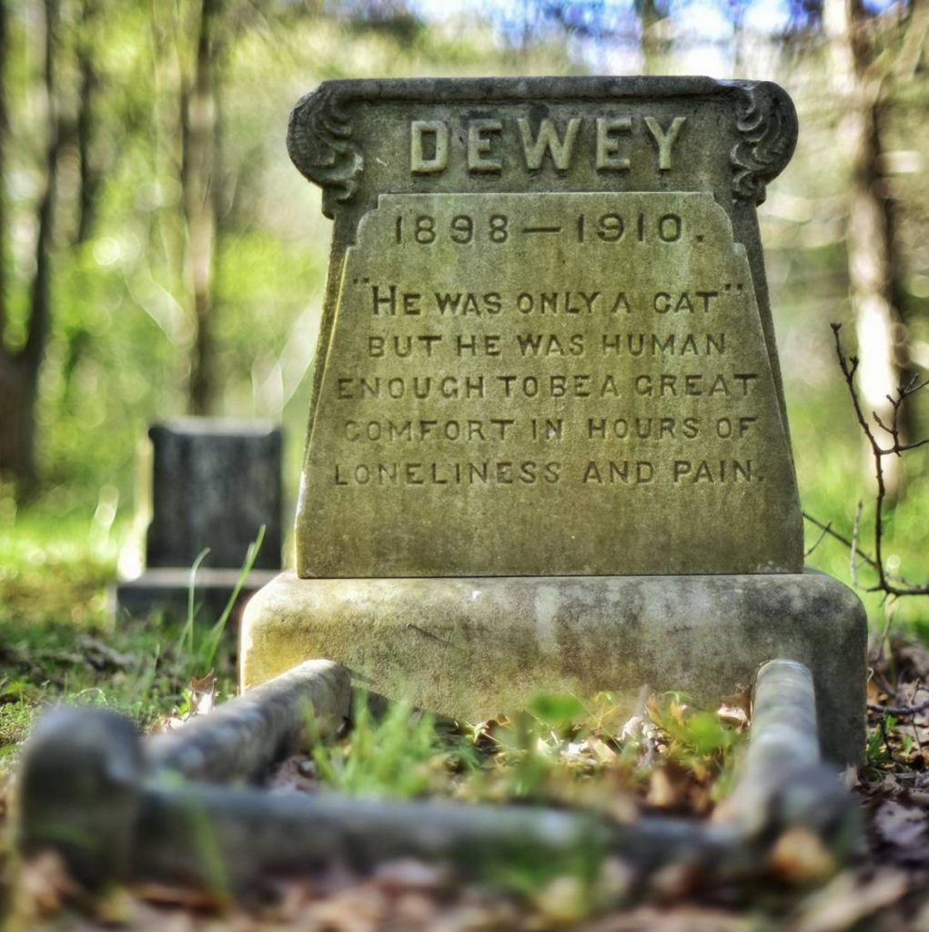 Daily History Picture: Remembering Cats