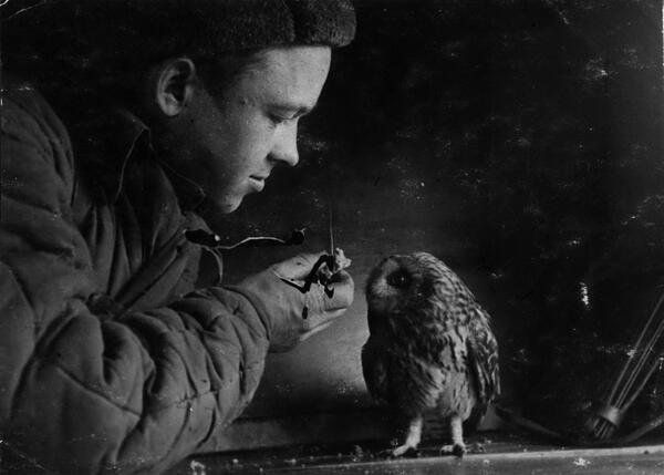 Daily History Picture: Owl and War