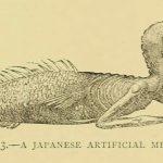 Japanese Mermaid in India