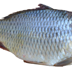God on a Medieval Fish