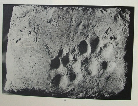 Paw Prints Through The Ages Cats Still Walk Wherever And